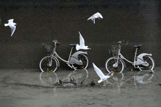 Seagulls fly near Velib public use bicycles in the canal Saint Martin in Paris on January 6, 2016 during a drainage and cleaning