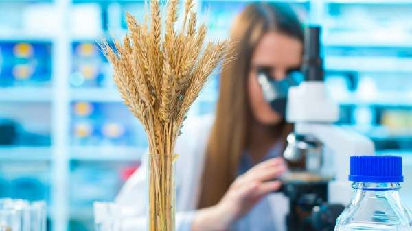 Searching big data for disease resistance in crops