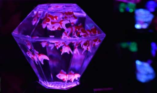 """Segatoys unveiled its""""Art Aquarium Prisrium"""" at the Tokyo Toy Show on June 10, 2016"""