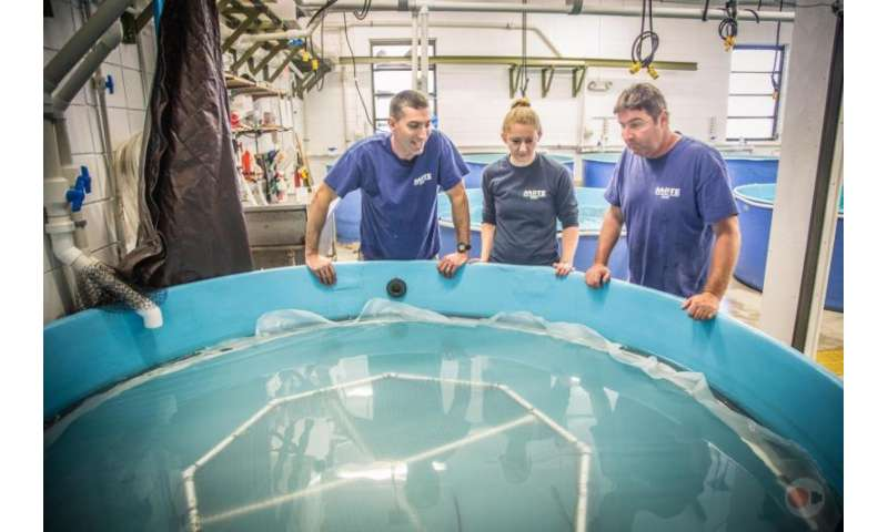 Shark researchers at Mote Marine Laboratory: Dr. Nick Whitney, Karissa Lear and Jack Morris