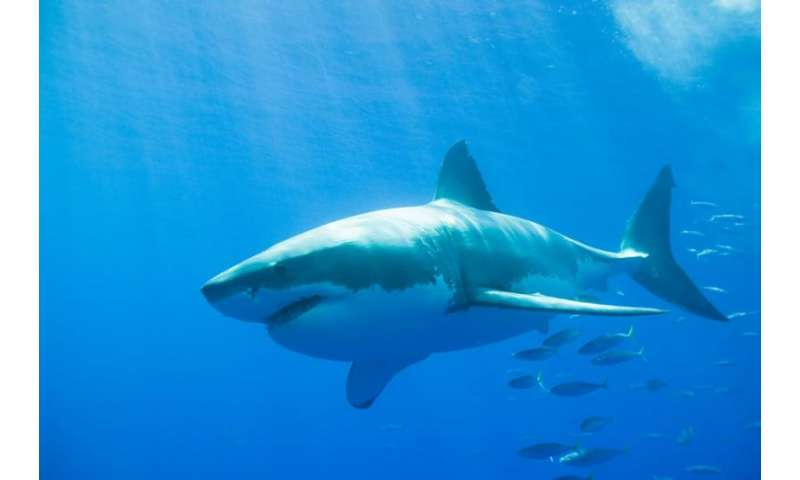 Shark-spotting sonar technology put to the test