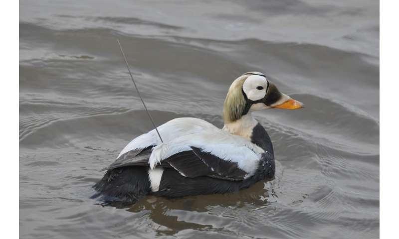 Shifting bird distribution indicates a changing Arctic