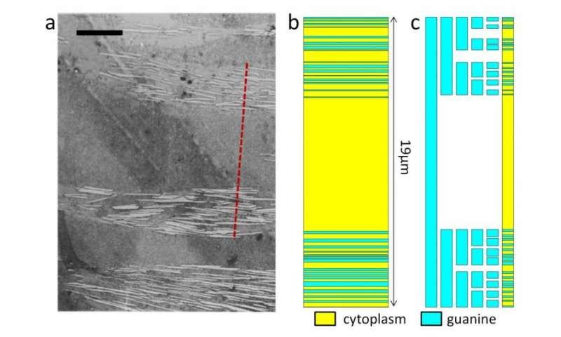 Shiny fish skin inspires nanoscale light reflectors