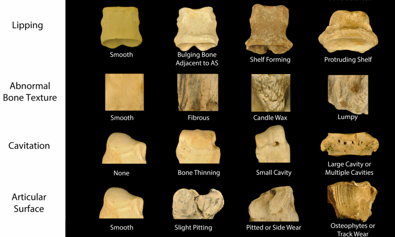 Significant changes in rhino bone health over 50 million years
