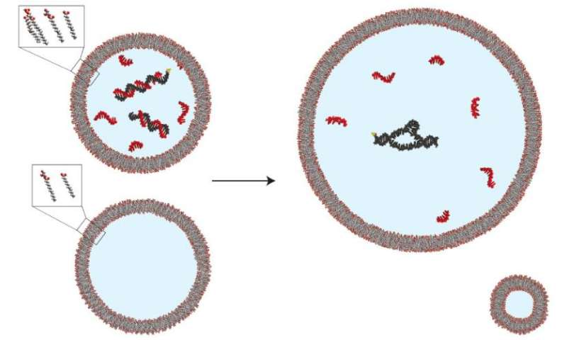 Simple mechanism may have allowed primitive cells to maintain internal conditions