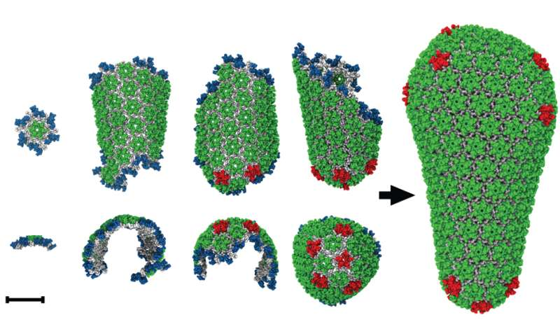 Simulations describe HIV's 'diabolical delivery device'
