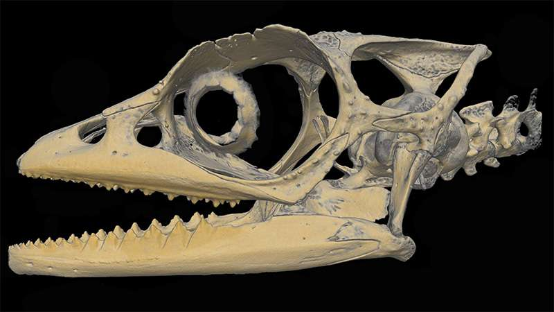 Single no more: First females of a Madagascan chameleon described with modern technologies