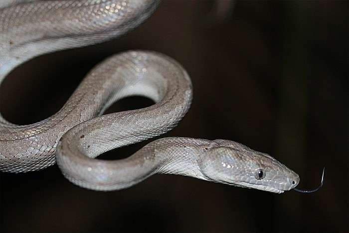 Slithery new species