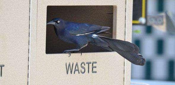Smarter than the average bird?