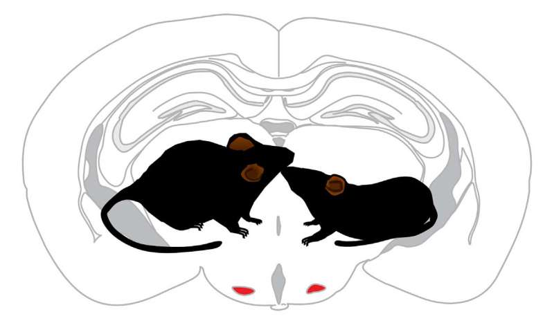 Smell tells intruder mice how to behave