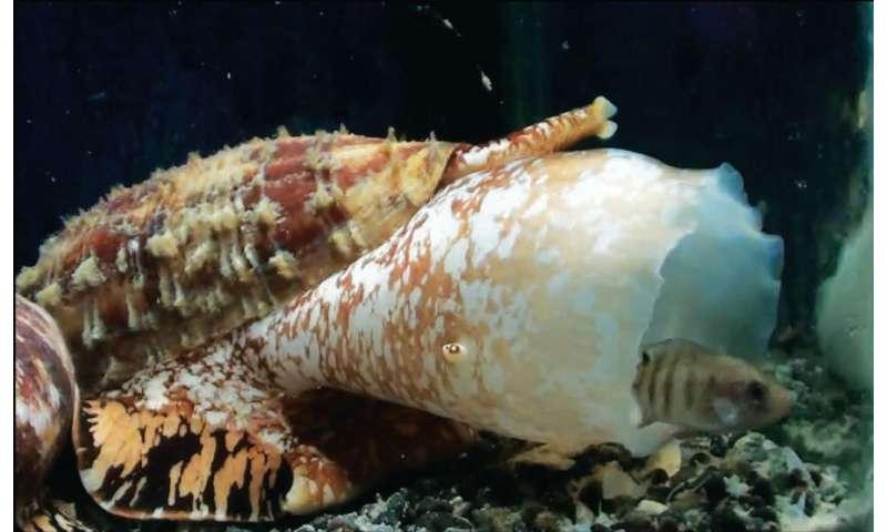 Snails' speedy insulin