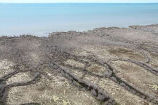 Some 7,000 hectares, or 9% of the mangroves in the Gulf of Carpentaria, perished in just one month