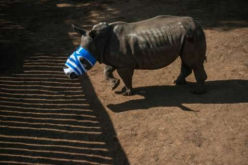 South Africa, home to around 20,000 rhinos, or 80% of the worldwide population, has borne the brunt of a recent boom in internat