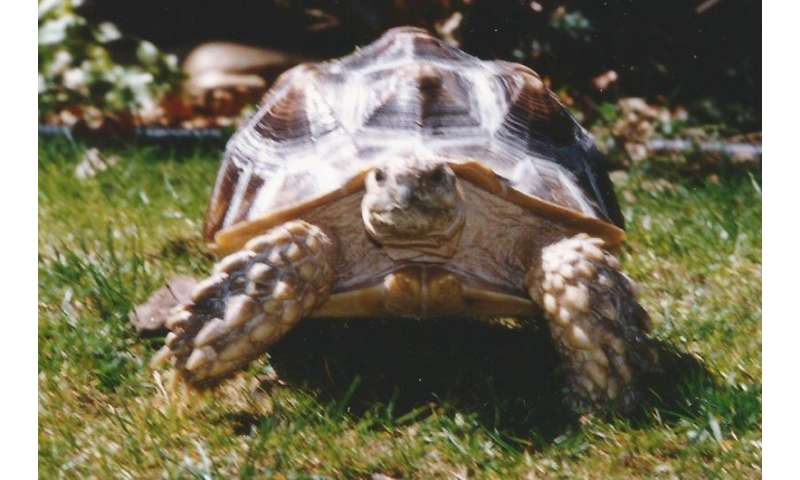 Speedy the tortoise and altering the genetic code