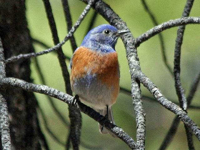 Storing more carbon in western Cascades forests could benefit some wildlife species, not others