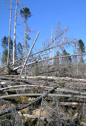 Storm warning—150 years of damage to Swiss forests