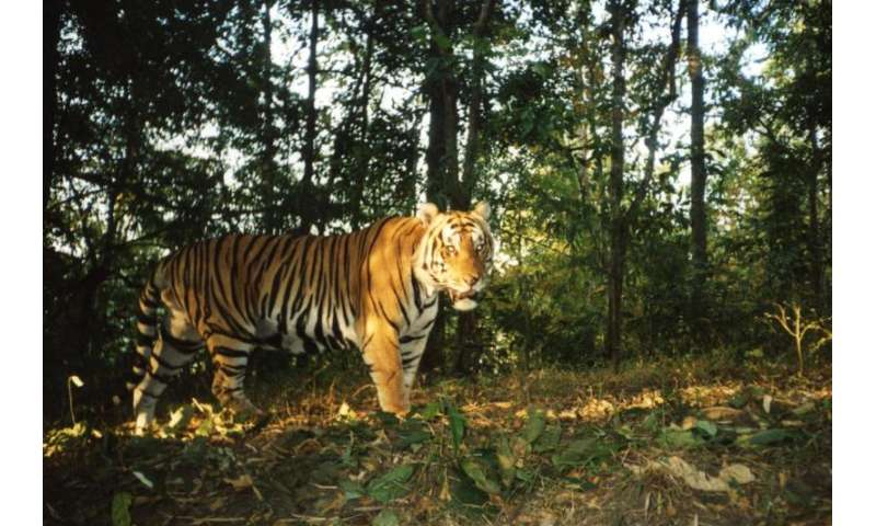 Study confirms only site in SE Asia showing tiger recovery