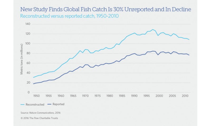Study finds 30 percent of global fish catch is unreported
