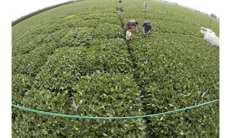 Study: Future drought will offset benefits of higher CO2 on soybean yields