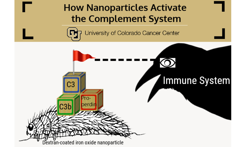 Study: How to keep nanoparticle caterpillars safe from the crows of the immune system