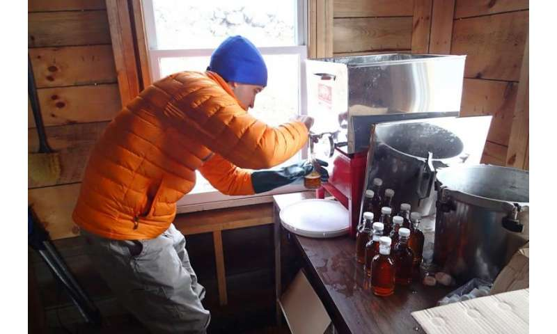 Studying climate change impact on maple syrup quality
