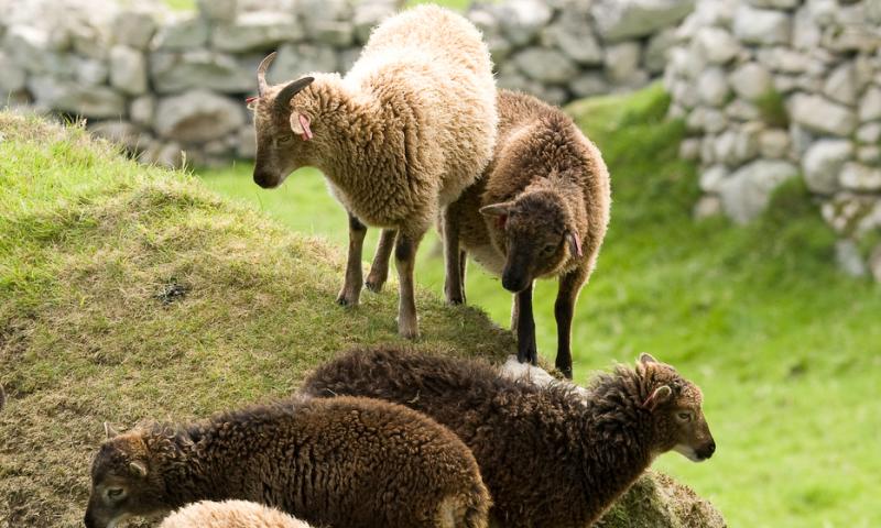 Sunshine vitamin linked to improved fertility in wild animals