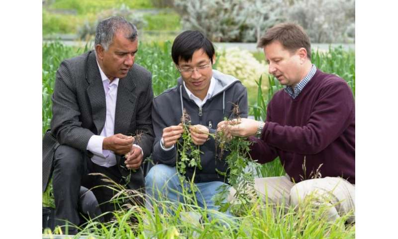 Super seeds promise better crops