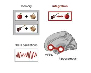 Synchronized brain waves in distant regions combine memories
