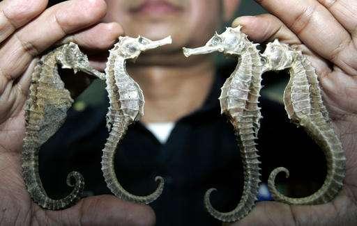 Thailand suspends seahorse trade amid conservation concerns