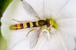 The buzz on how climate change impacts nature's mimicry system