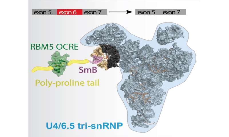 The good, the bad and the spliceosome!