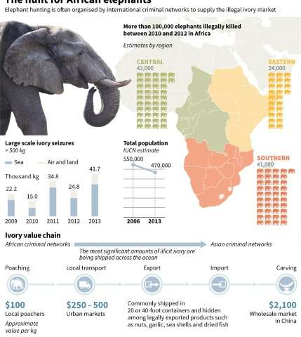 The hunt for African elephants
