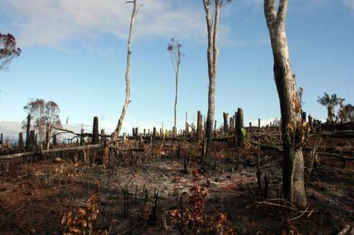 The impact of deforestation on south-eastern Madagascar has been devastating