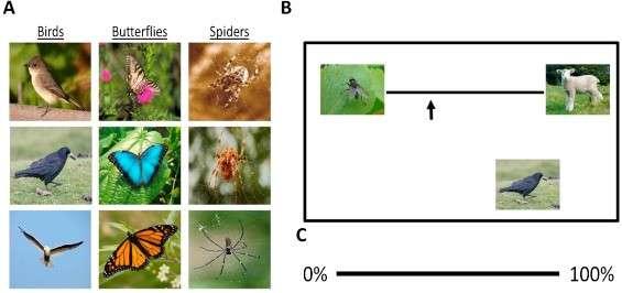 The itsy bitsy spider? Arachnophobes overestimate spider sizes
