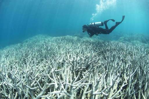 The World Heritage-listed reef is currently suffering its worst bleaching in recorded history with 93 percent of corals affected