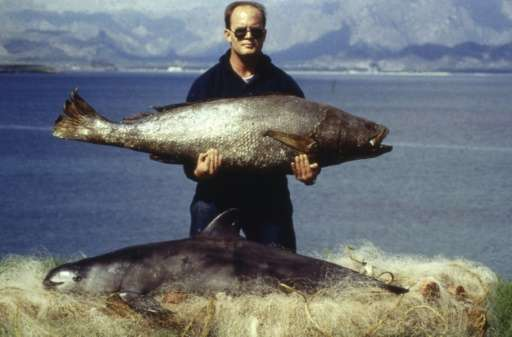 This handout photo released by World Wide Fund for Nature (WWF) and taken on February 1992 in Santa Clara Gulf, Sonora,Mexico sh