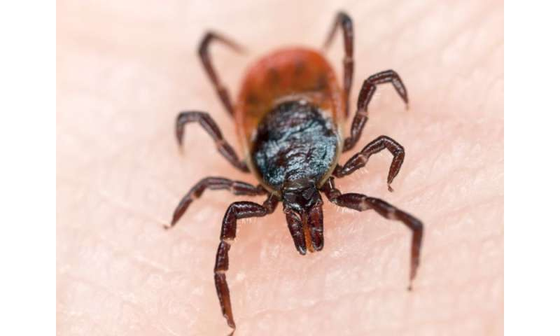 Tickborne bacteria identified in ticks from texas
