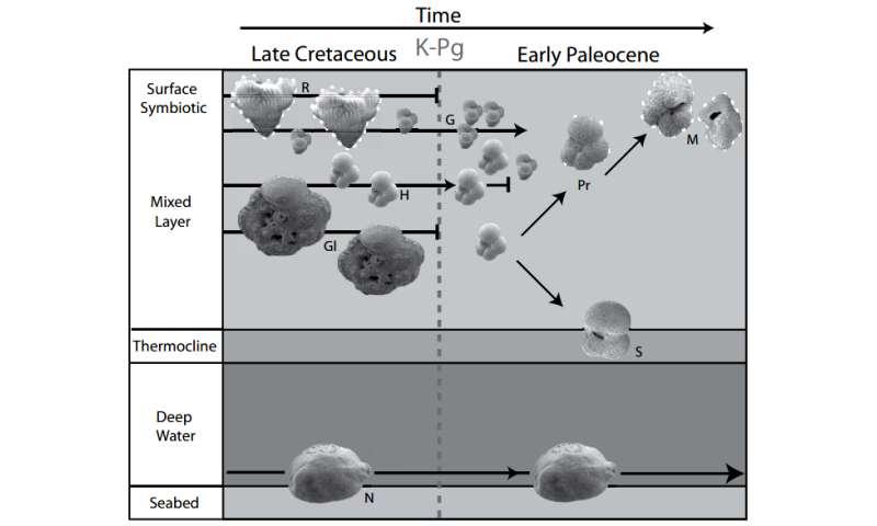 Tiny fossils tell a long(ish) story