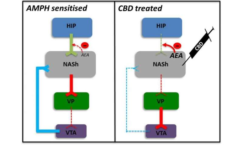 A new antipsychotic mechanism of action for cannabidiol