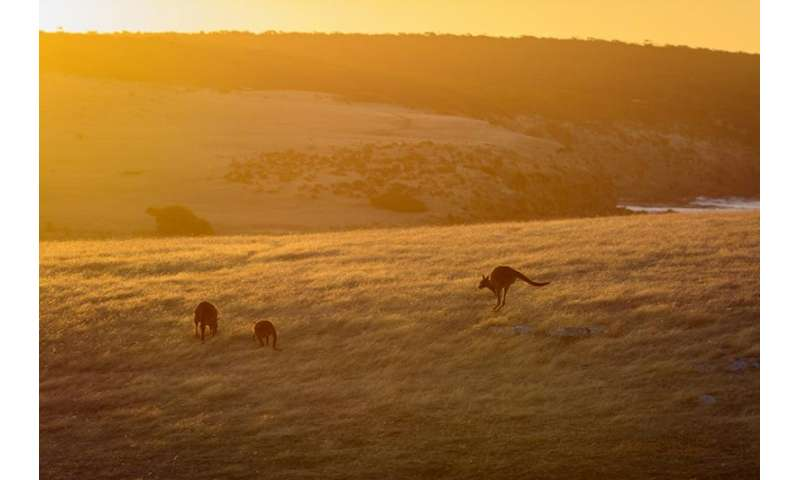 Towards 100% renewable energy for Kangaroo Island
