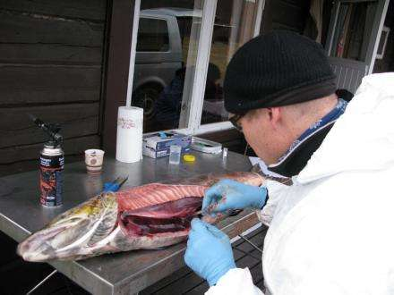 Transmission of new virus believed to occur between farmed and wild fish