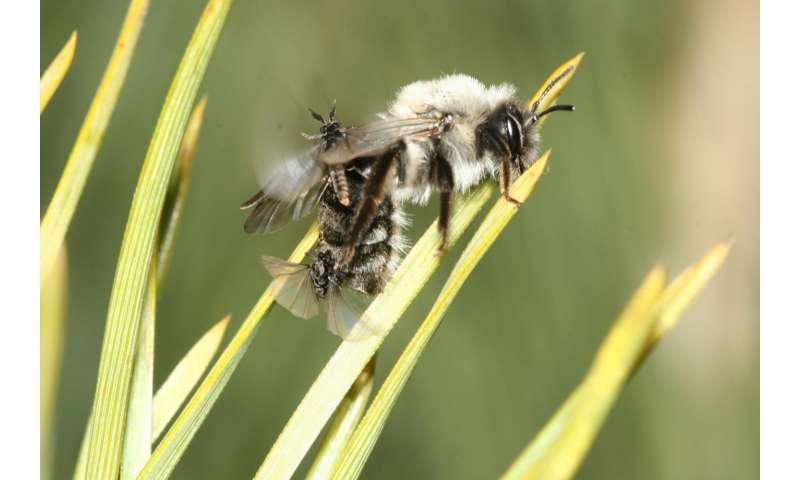 Trauma in a bee