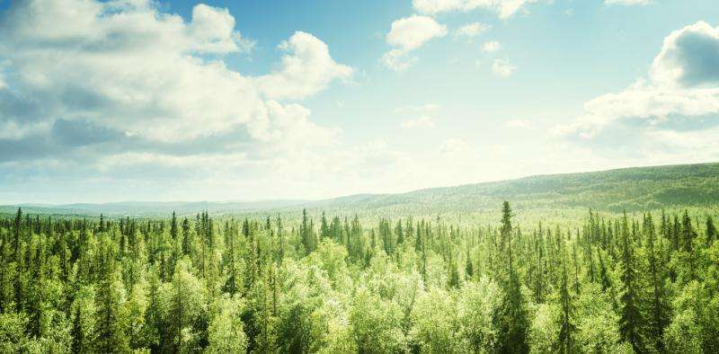 Trees are much better at creating clouds and cooling the climate than we thought