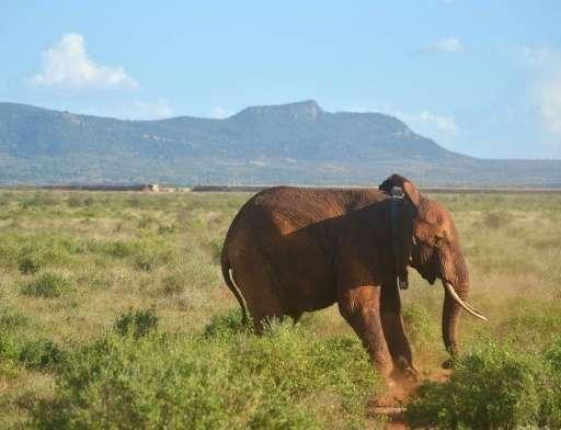 Tsavo, spread over a western and eastern park, covers a vast 20,812 square kilometre area of dense bush
