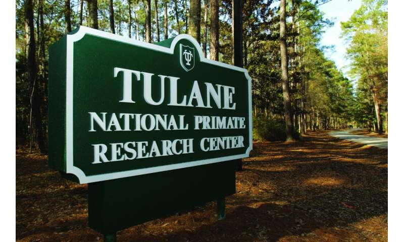 Tulane researchers find other layers of immunity in TB/HIV co-infections