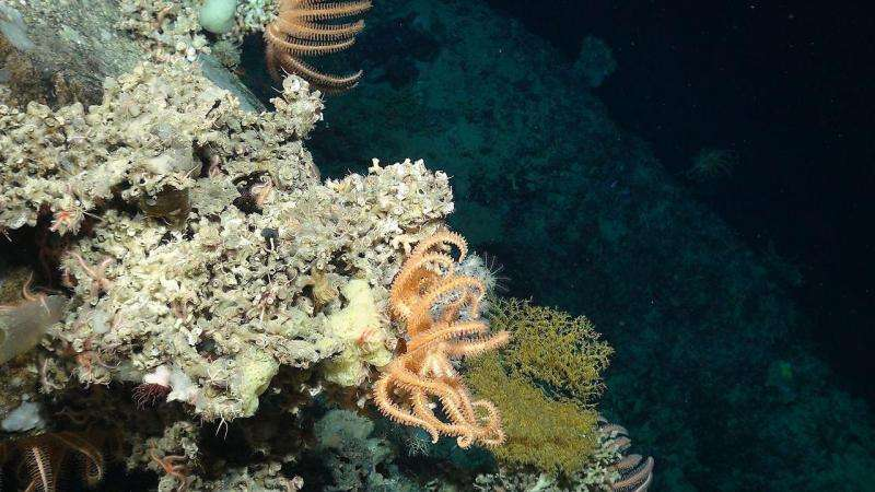 Underwater robots offer glimpse into deep-sea life