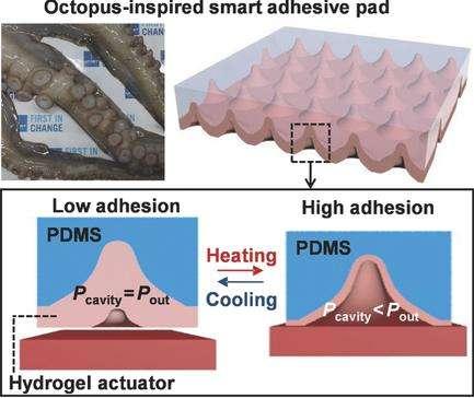 UNIST engineers octopus-inspired smart adhesive pads