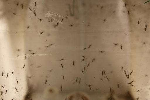 UN: Zika increasingly alarming but Rio Olympics should be OK