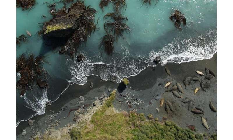 Using drones without disturbing wildlife