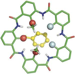 Variations in size, shape and electronic properties of ring-shaped molecules lead to changes in ion-selectivity
